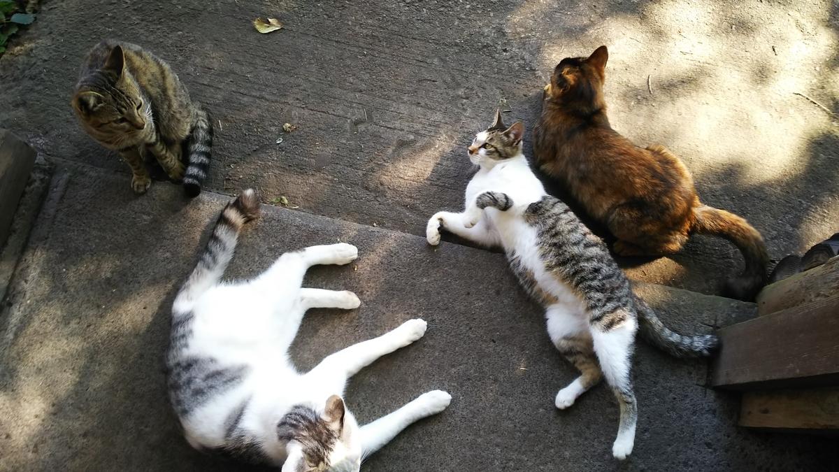 猫 一派 仲良し