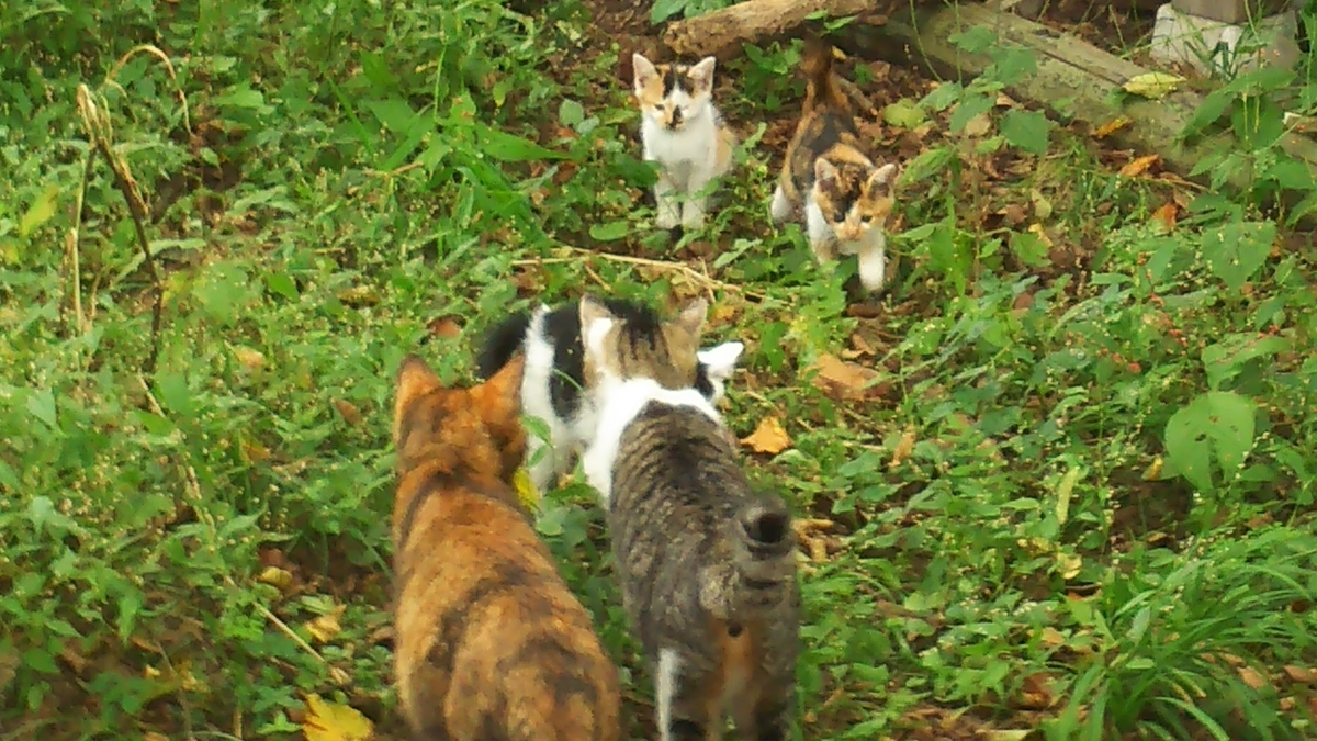 子猫たち 成猫