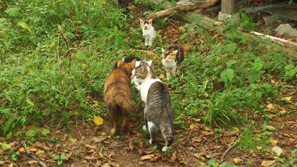 猫 挨拶 子猫