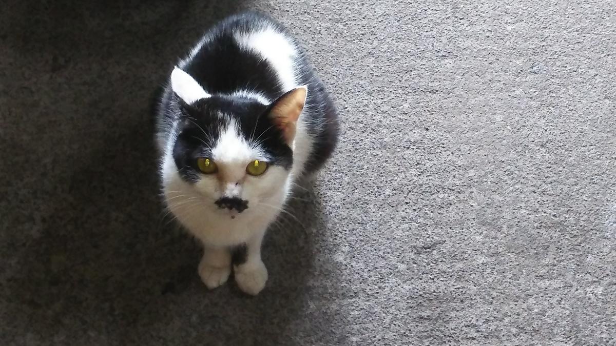 白黒猫 かぎしっぽ