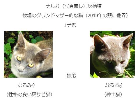 灰柄猫 灰ザビ猫