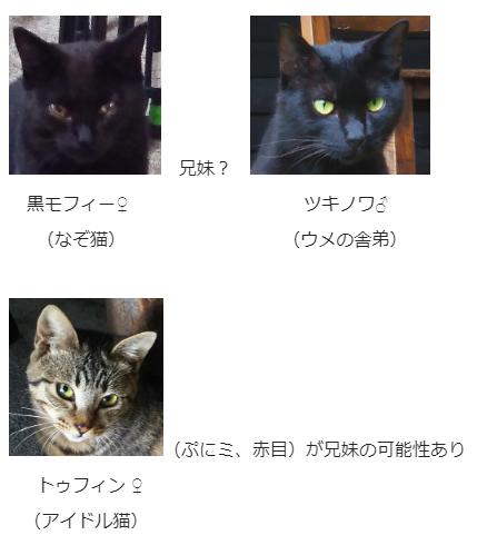 ウメ一派 黒猫