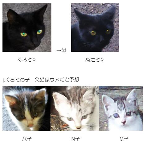 黒猫 家族