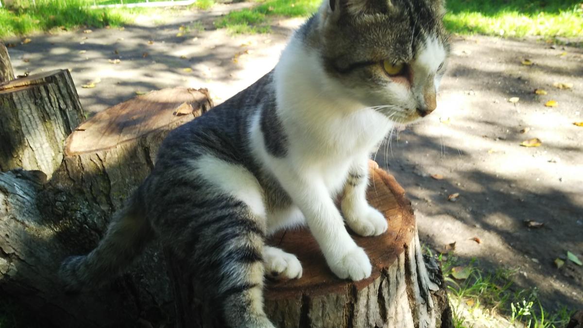 猫 キジ白 グルーミング