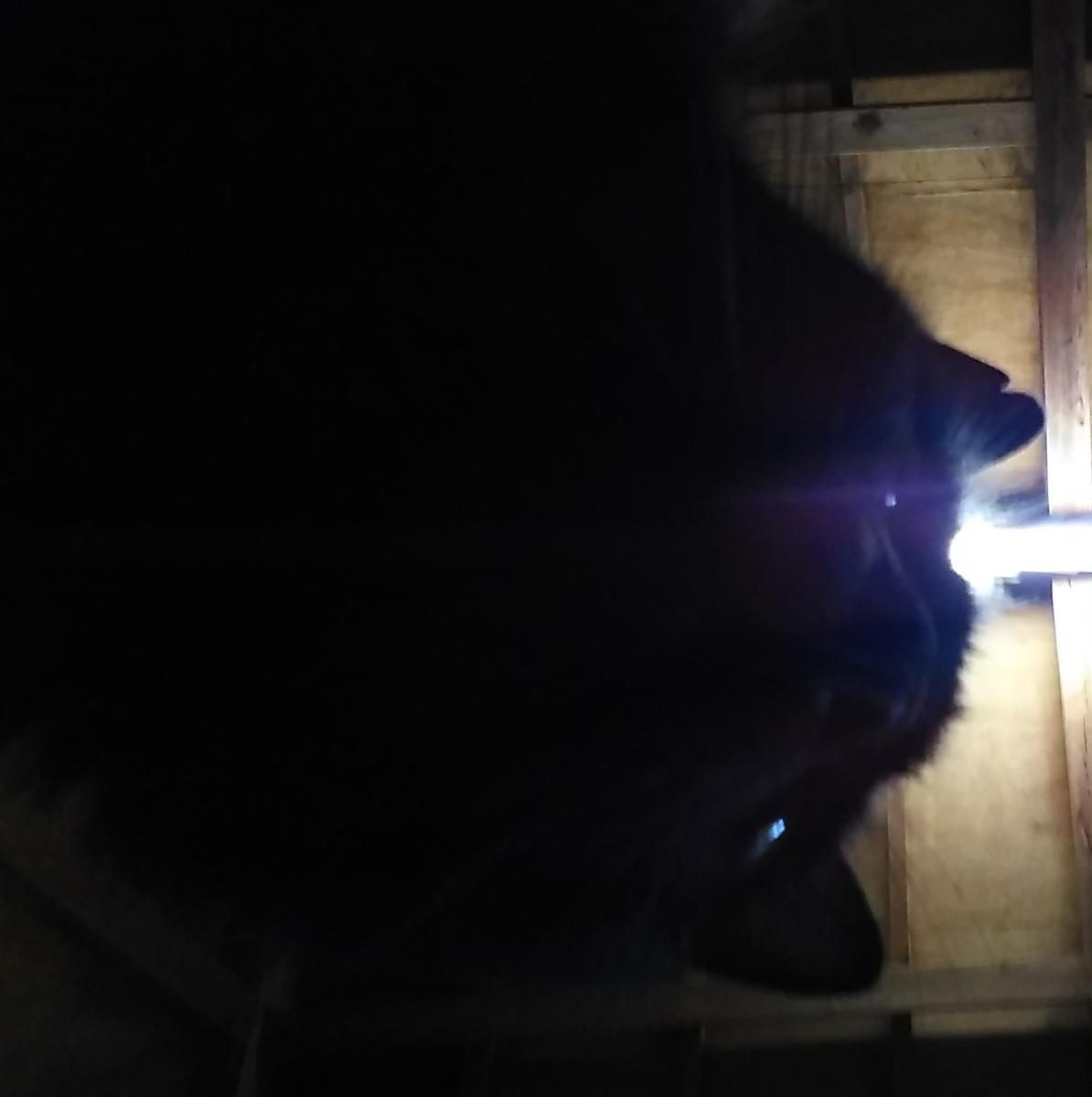 猫 自撮り 黒猫
