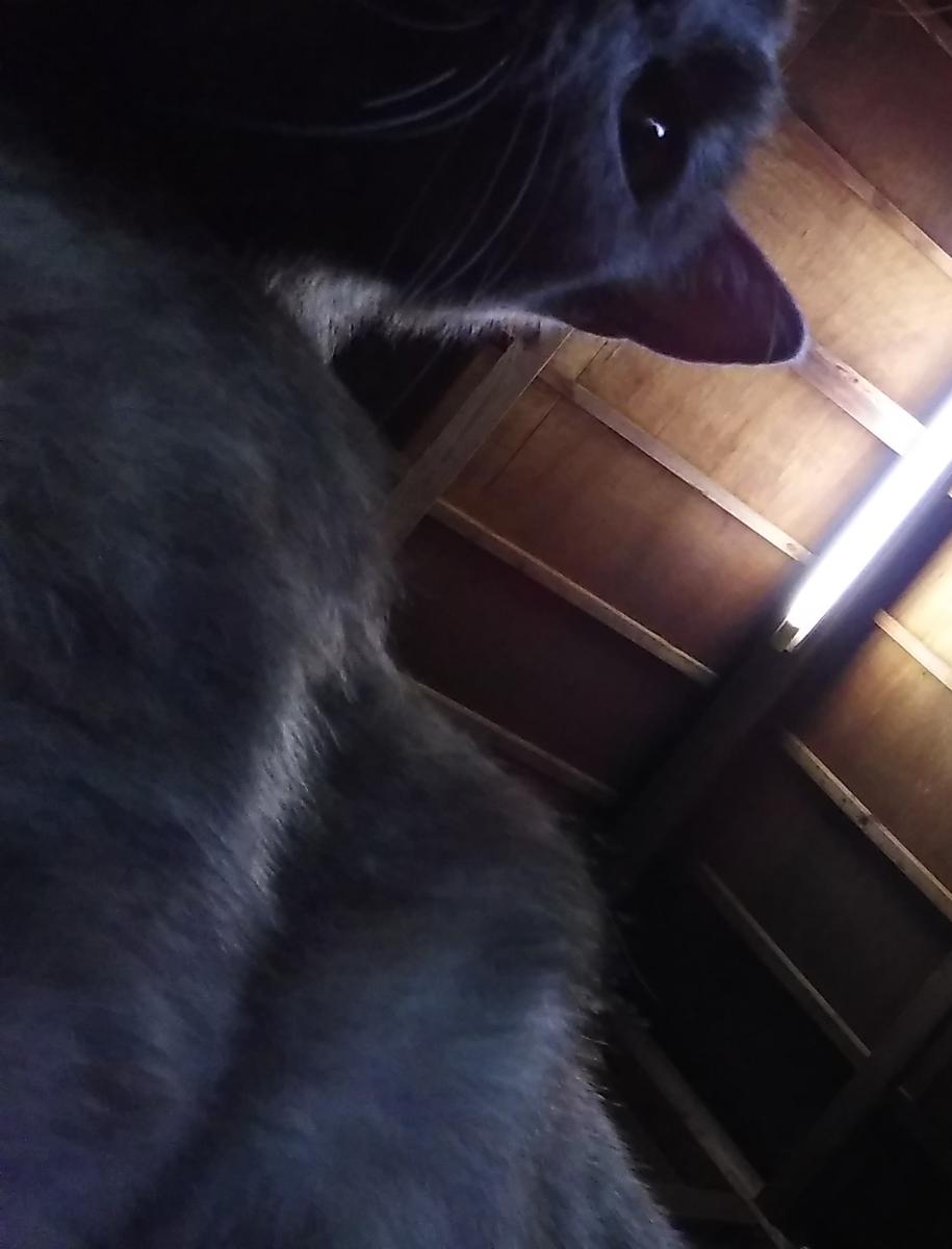 猫 自撮り スマホ