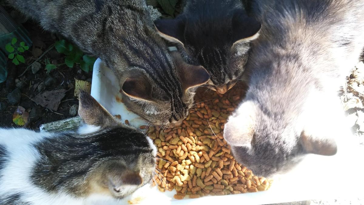 猫 ご飯 たくさん