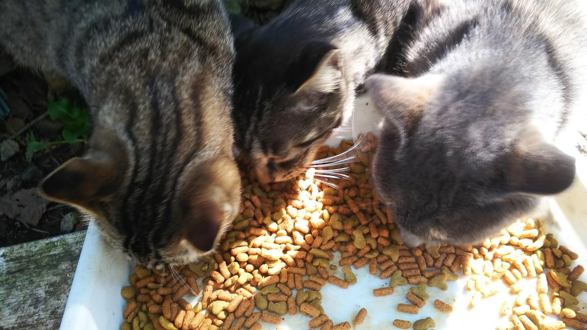 猫 ご飯タイム 撫でれる