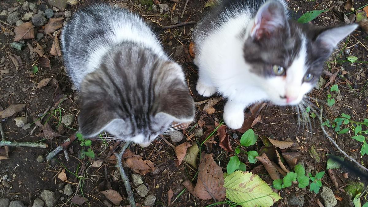 子猫 かわいい Cat