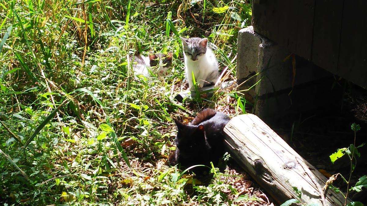 猫家族 かわいい 仲良し