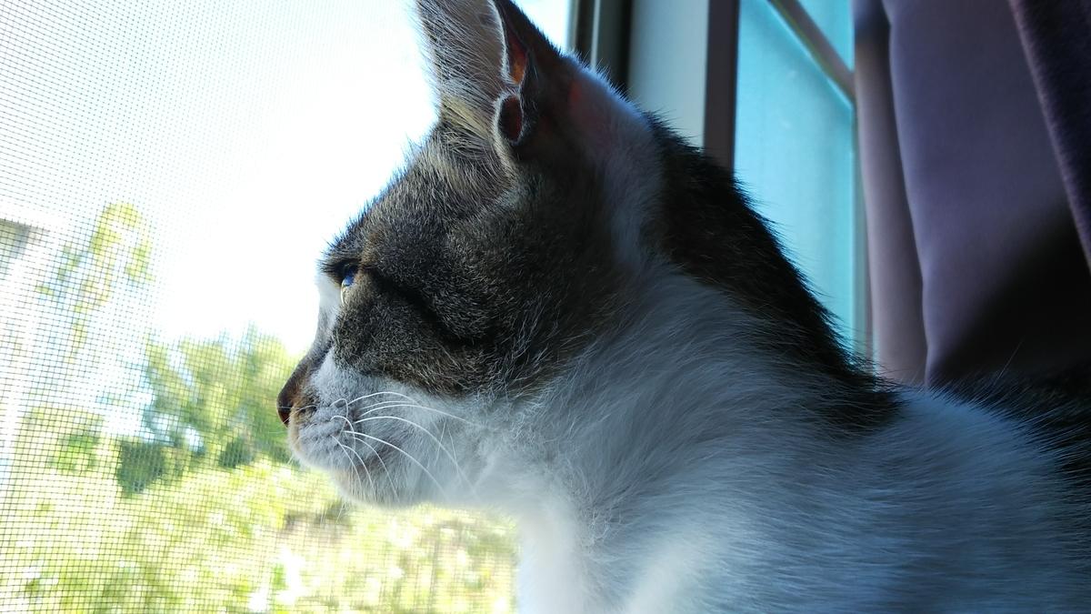 猫 台風 備え その後