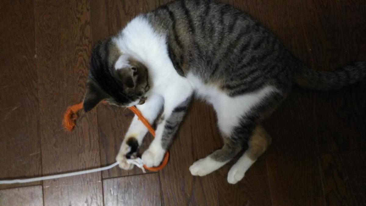 猫じゃらし ひも よく遊ぶ
