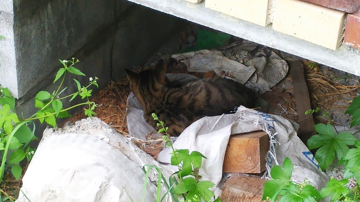 猫 キジトラ トゥフィン 寝床