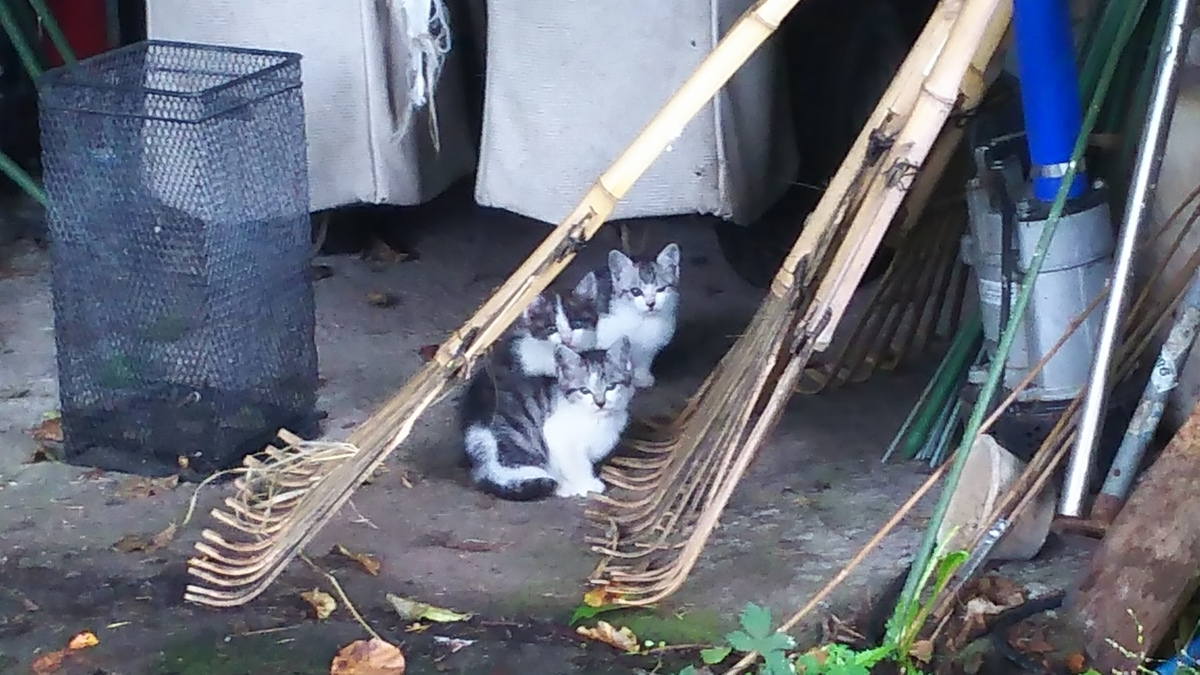 子猫 野良猫