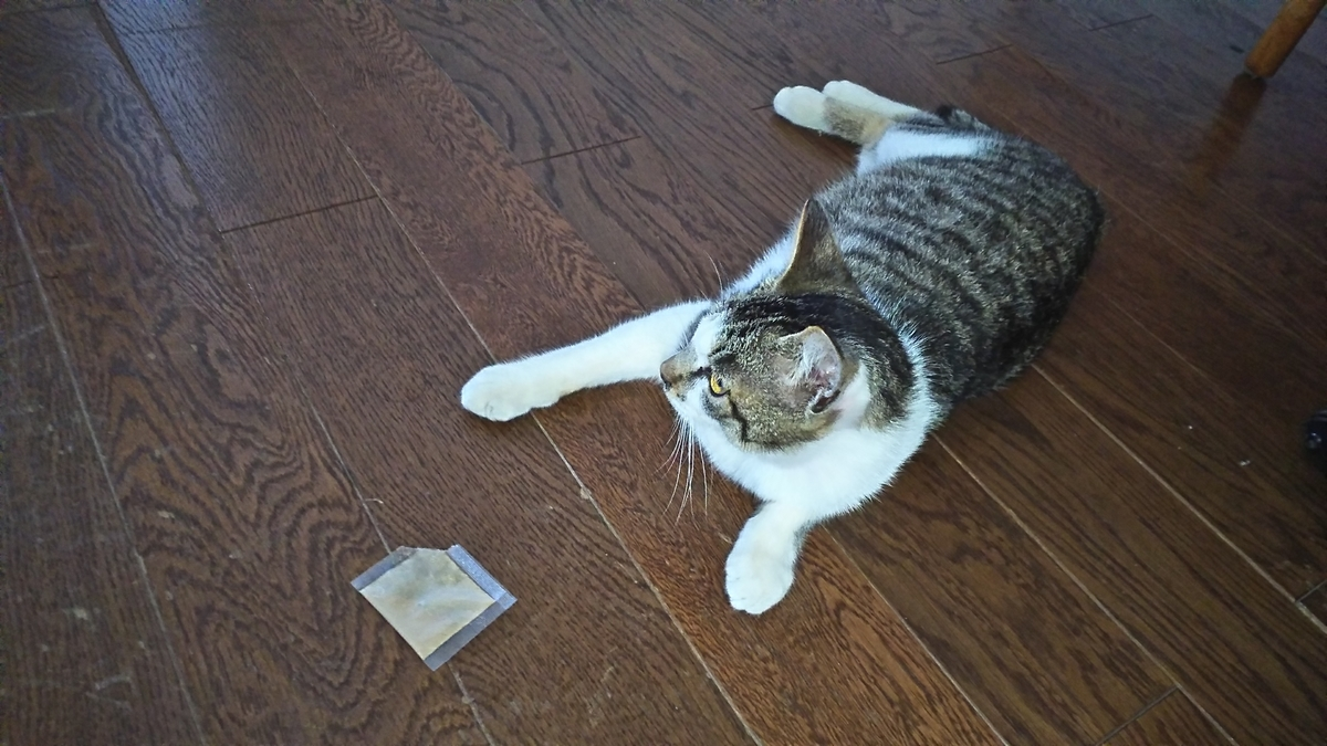 猫 マタタビ