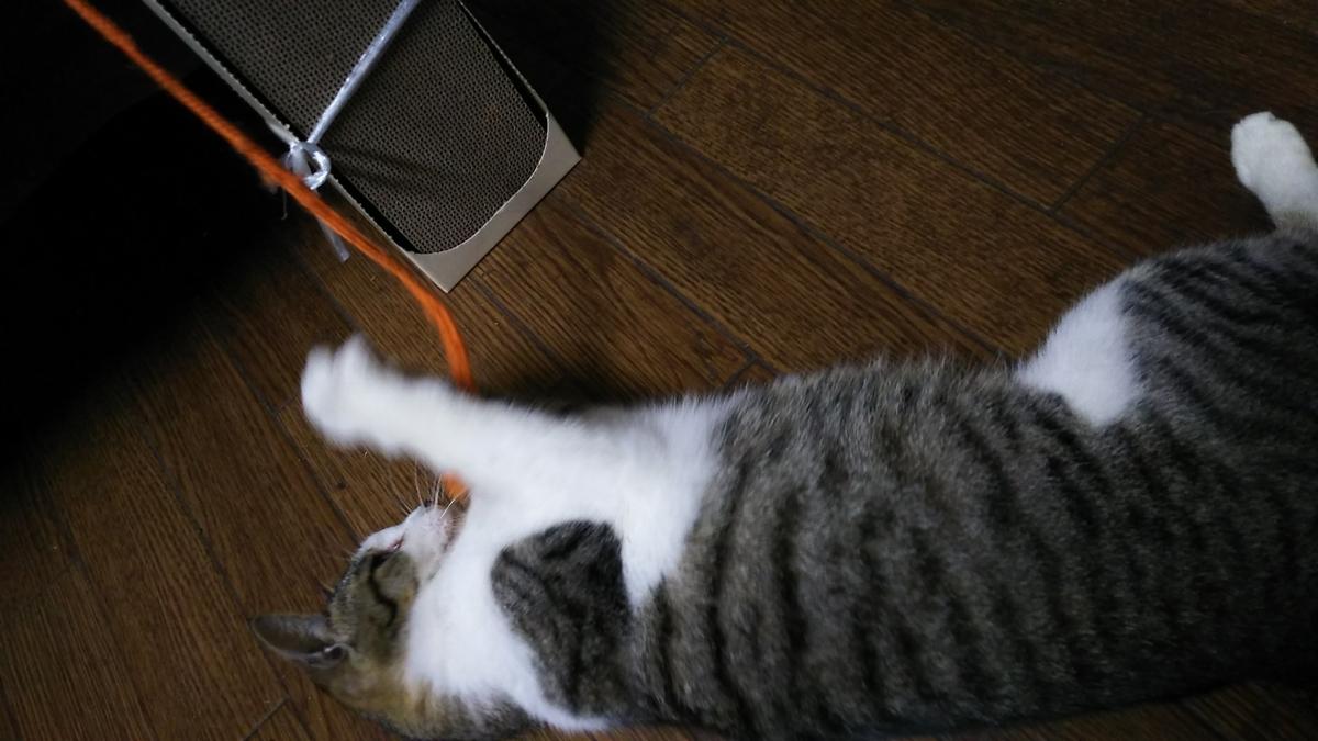 猫 爪とぎ 使わない