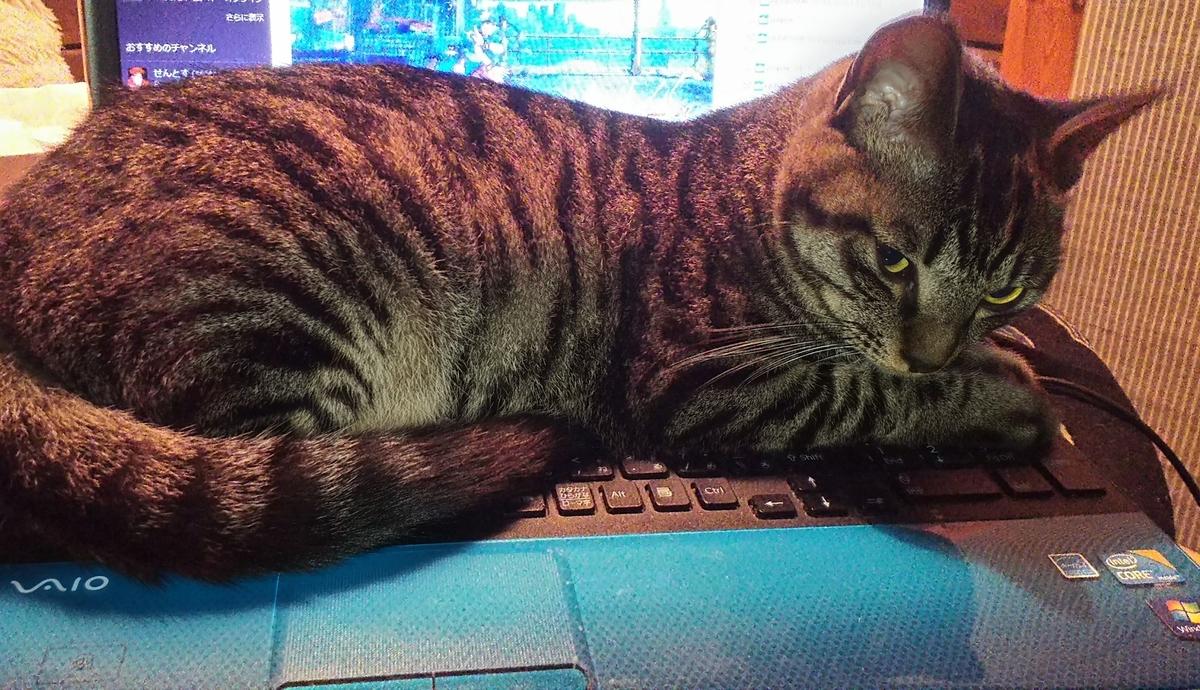 猫 PC 乗る