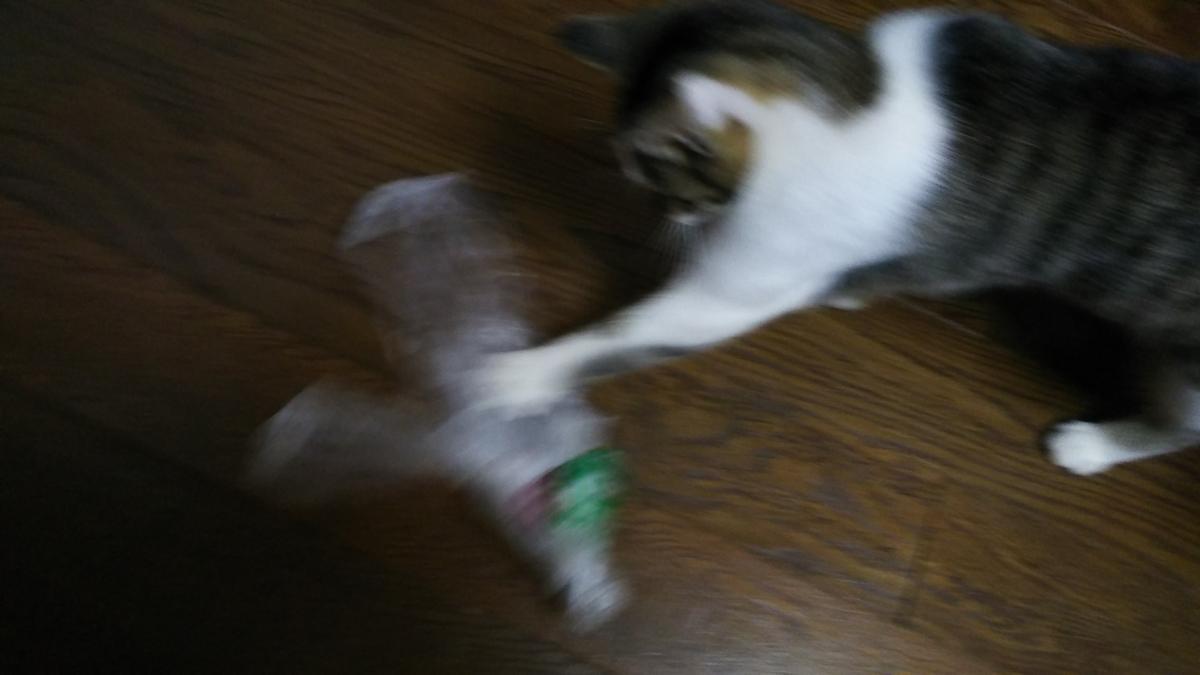 猫 ビニール袋 じゃれる