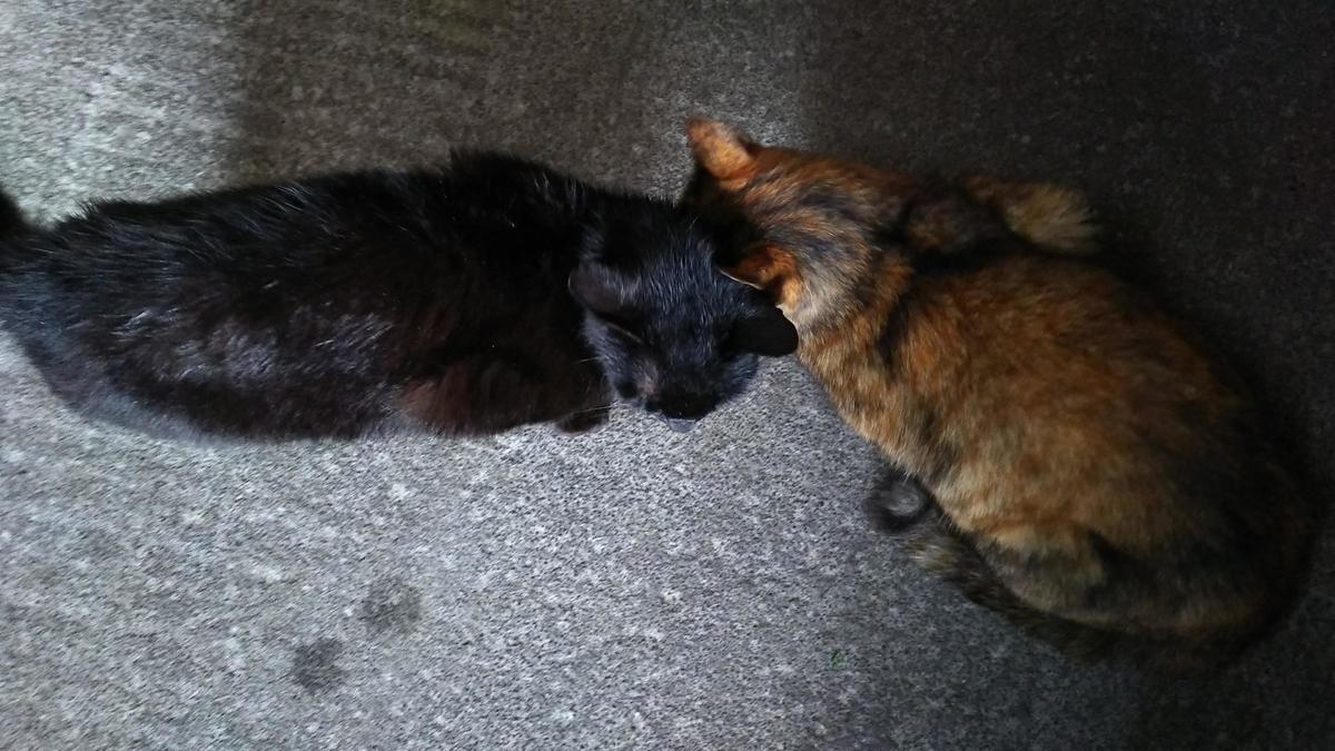 猫 仲良し 頭突き