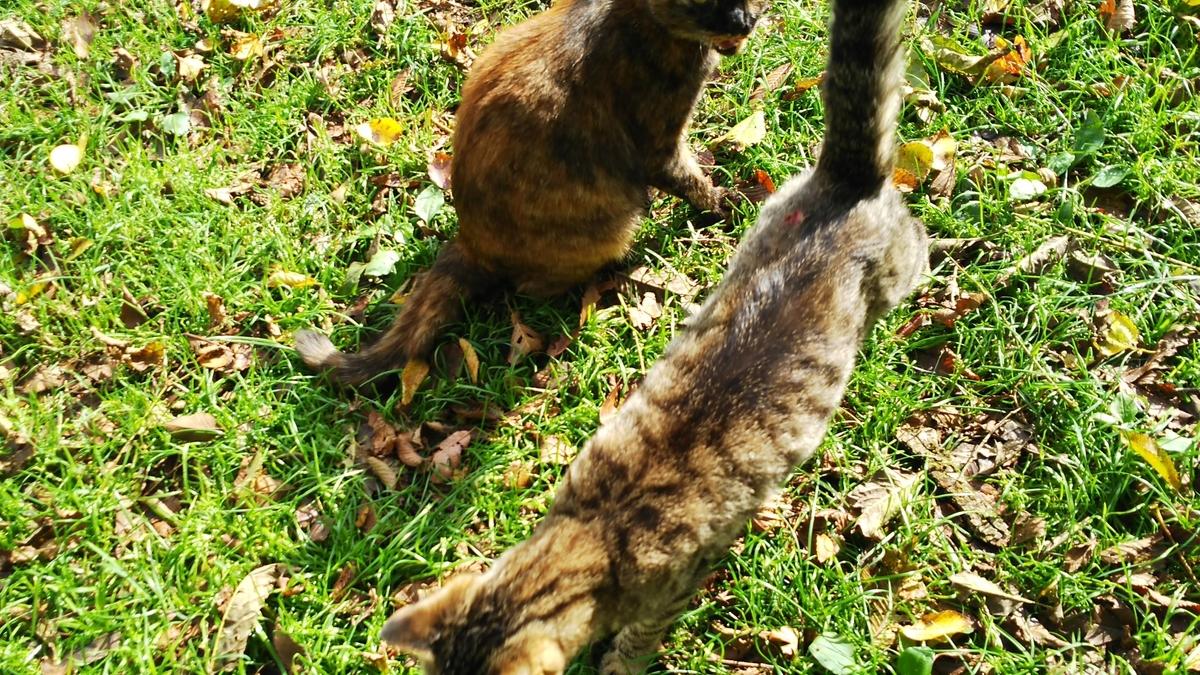 サビ猫 キジトラ メス 仲良し