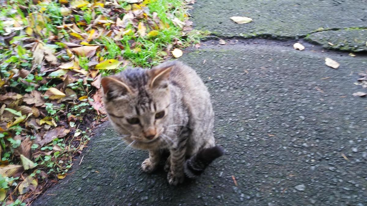 猫 キジトラ 茶色い