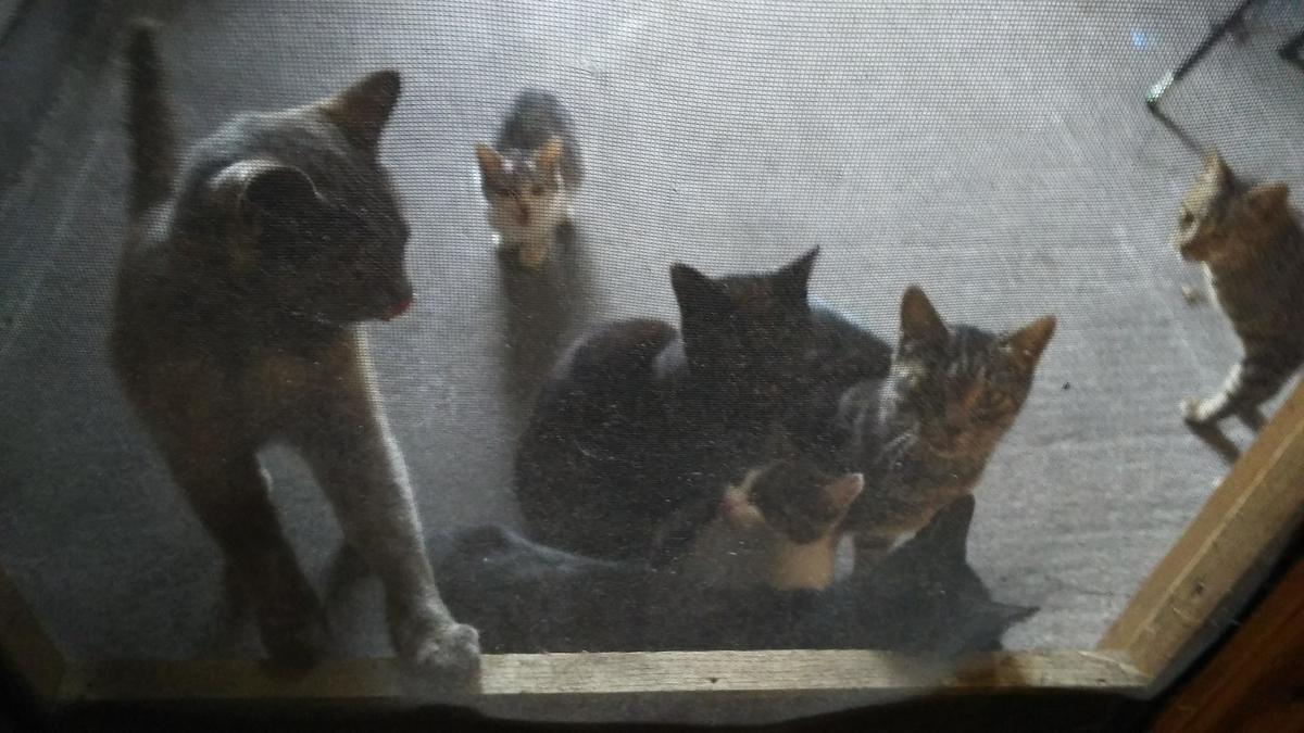 猫大家族 たくさん
