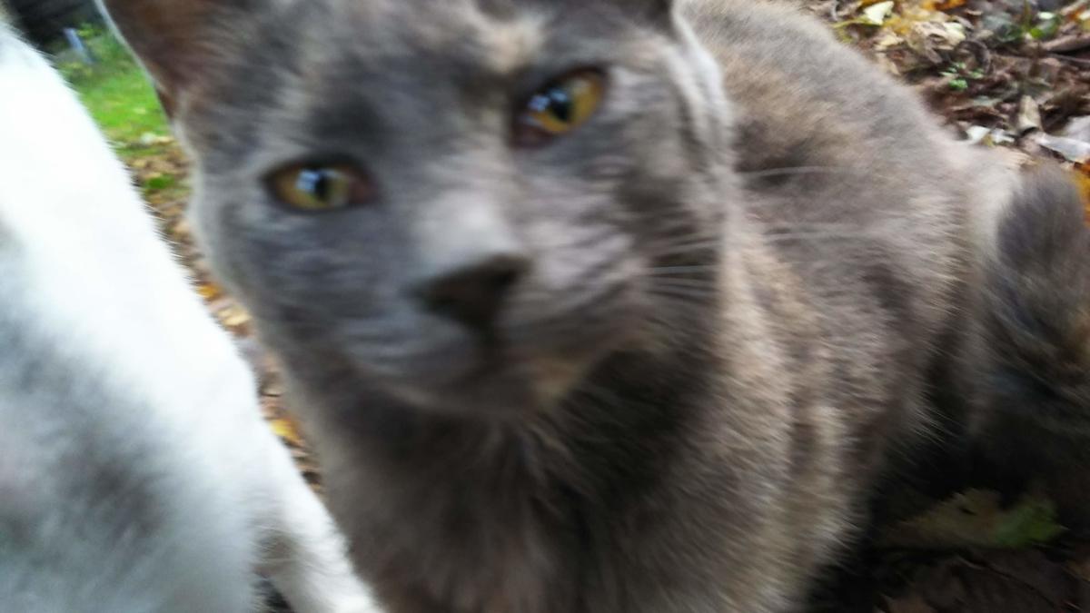 灰サビ猫 性格 優しい