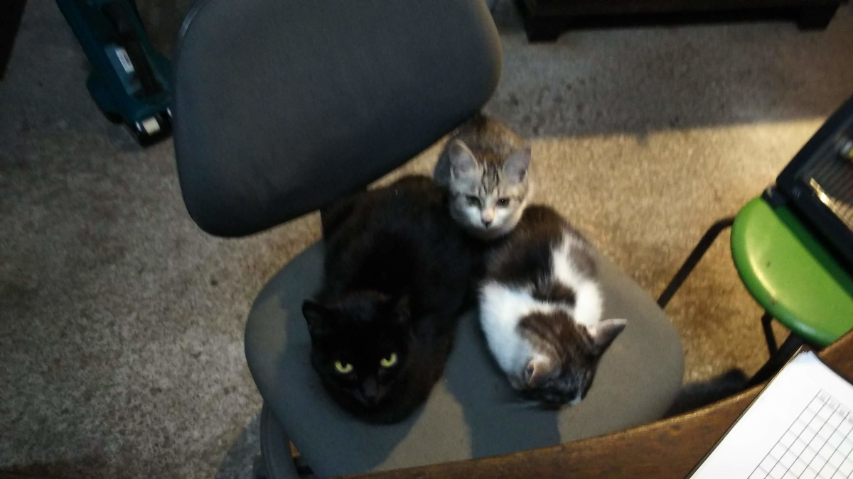 猫 温まる ヒーター