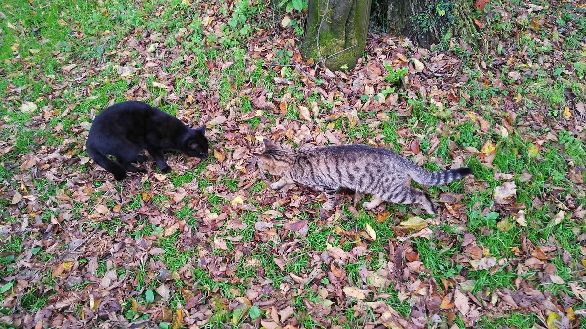猫の挨拶 鼻を近づける