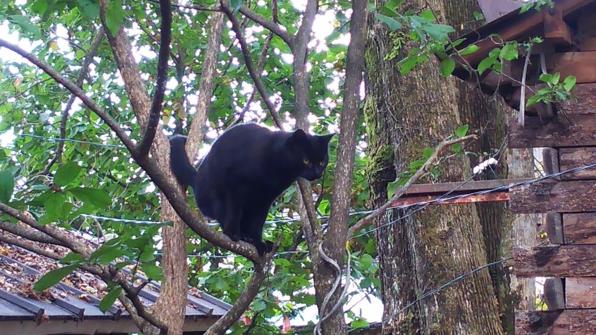 猫 木登り