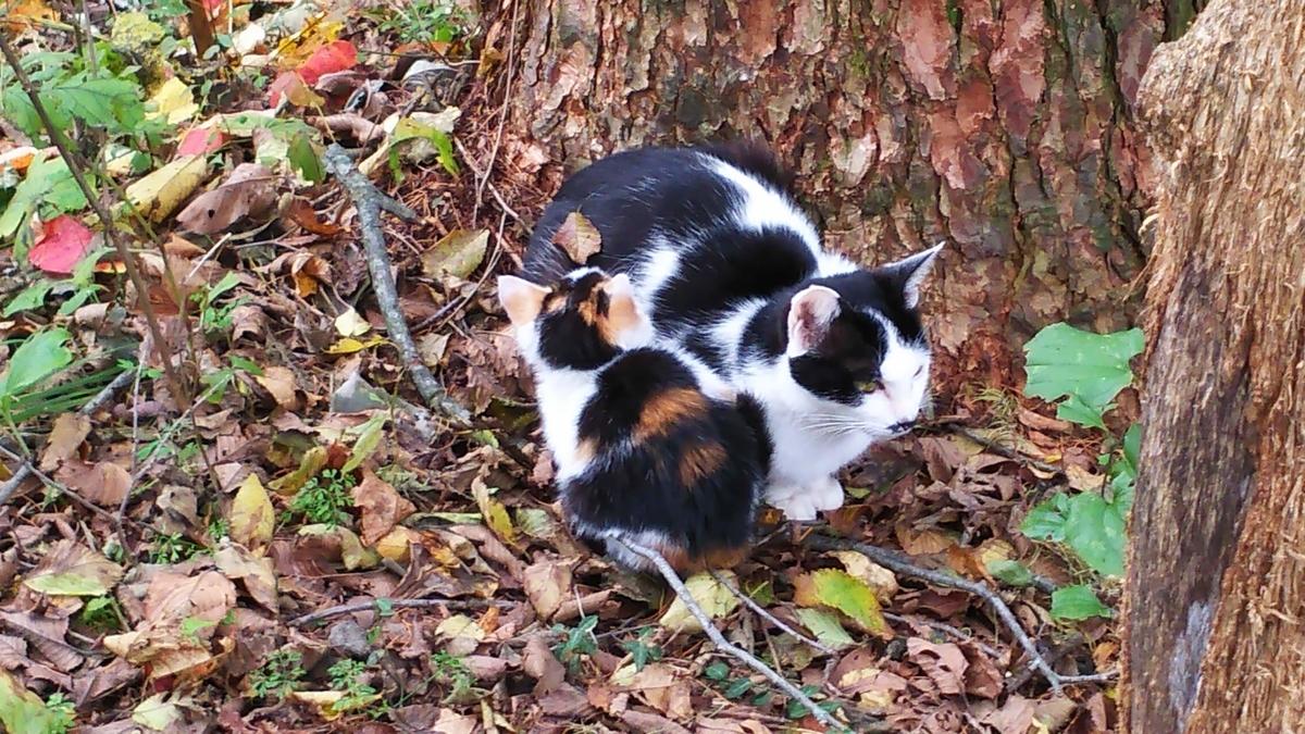猫 子育て 子猫