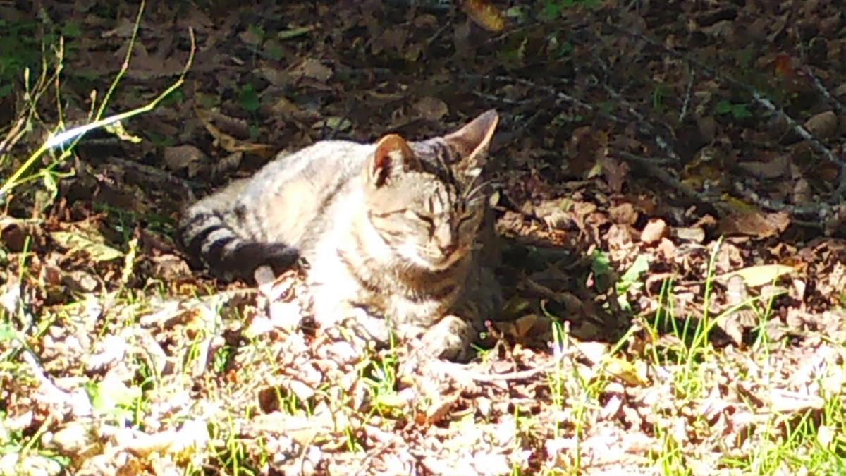 キジトラ 日向ぼっこ 猫