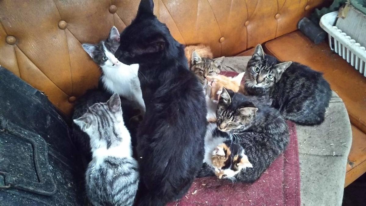 猫団子 猫家族 大家族