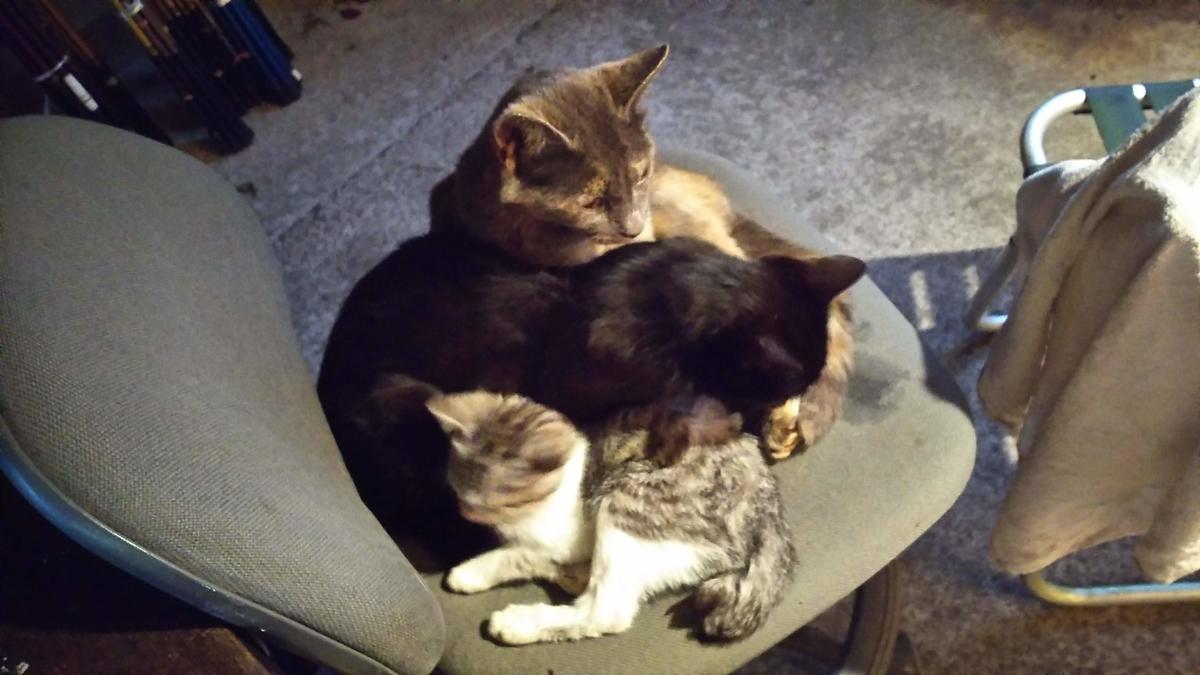猫団子 猫家族