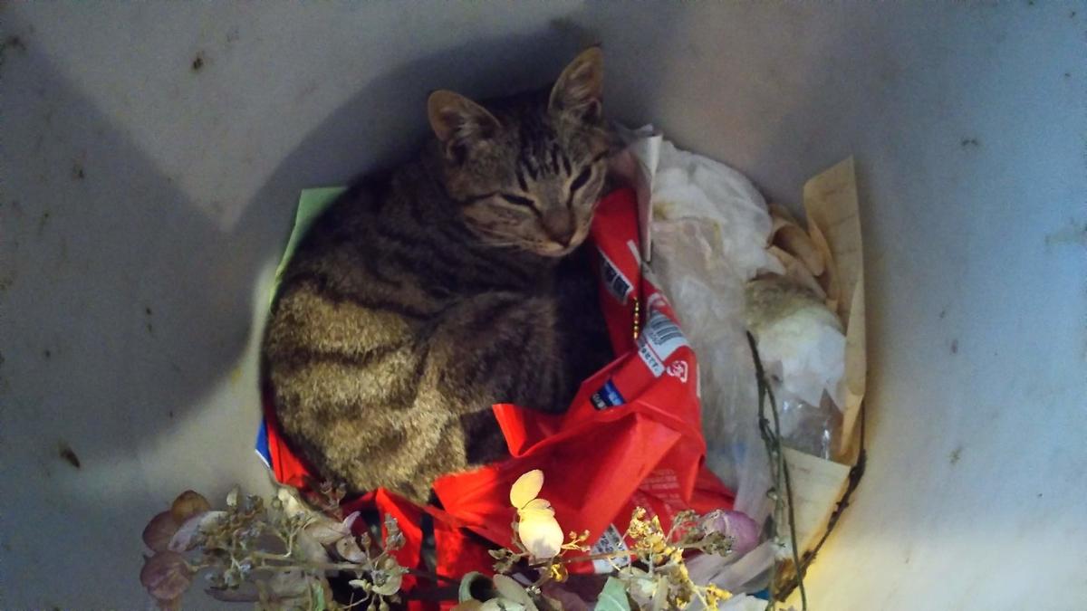 猫 ゴミ箱 寝床