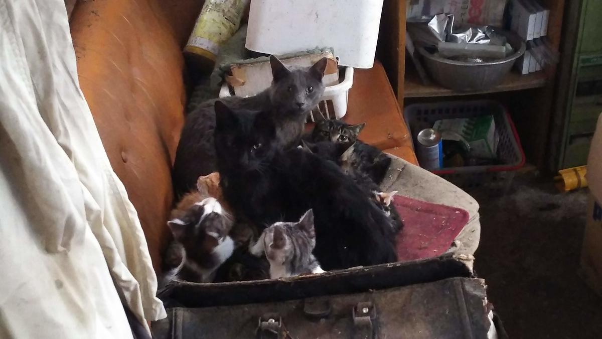 猫団子 暖かい 謎
