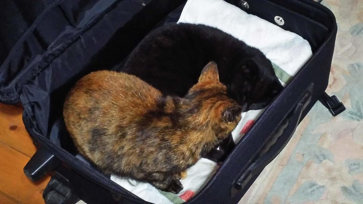 猫 仲が悪い スーツケース