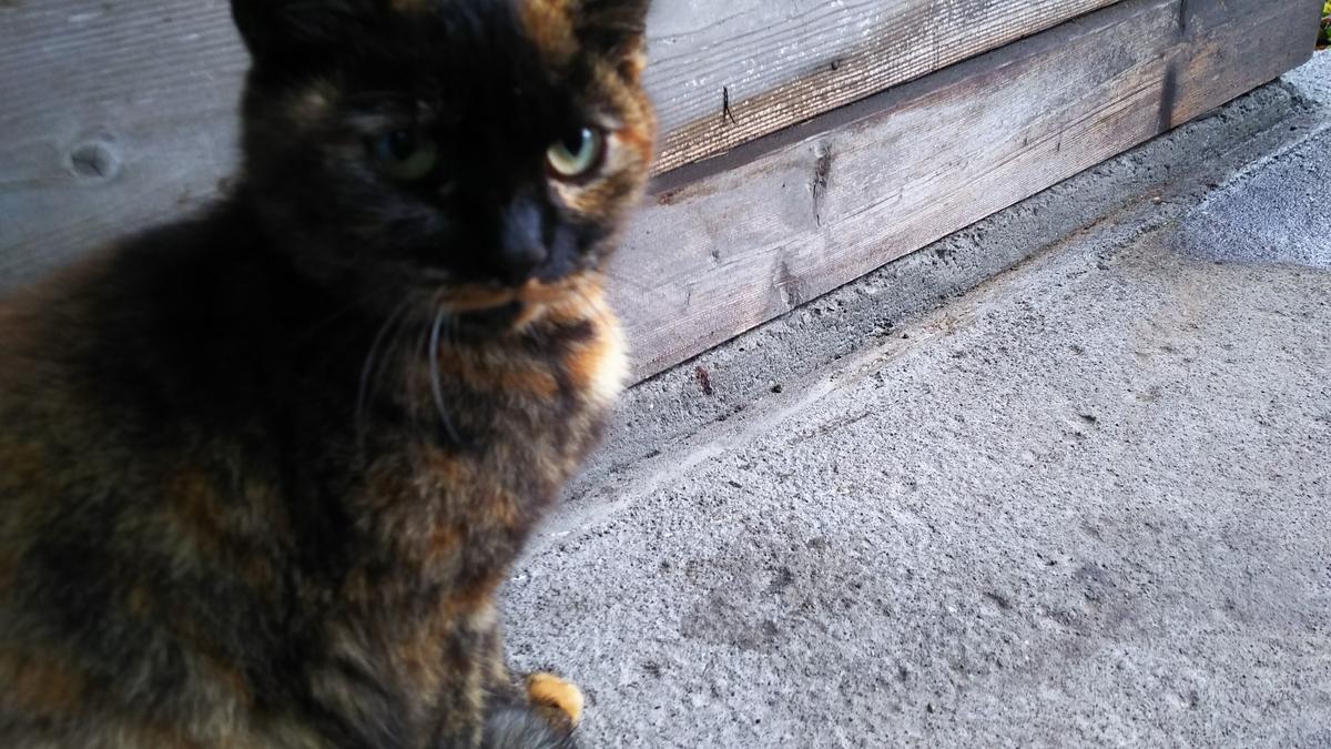 サビ猫 おてんば CAT