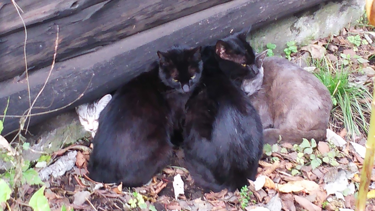 猫団子 寒さを凌ぐ 野良