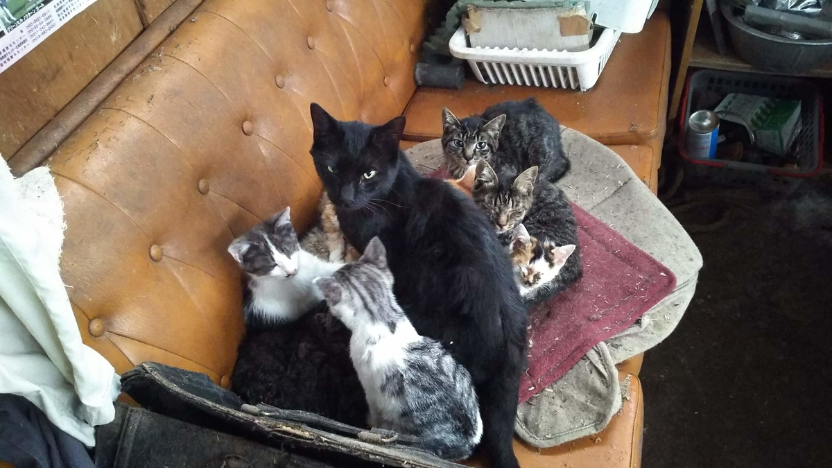 大猫団子 猫家族 固まる