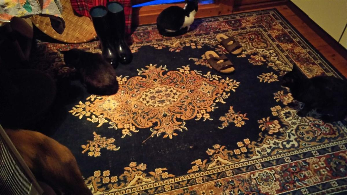 猫 希望 仲間