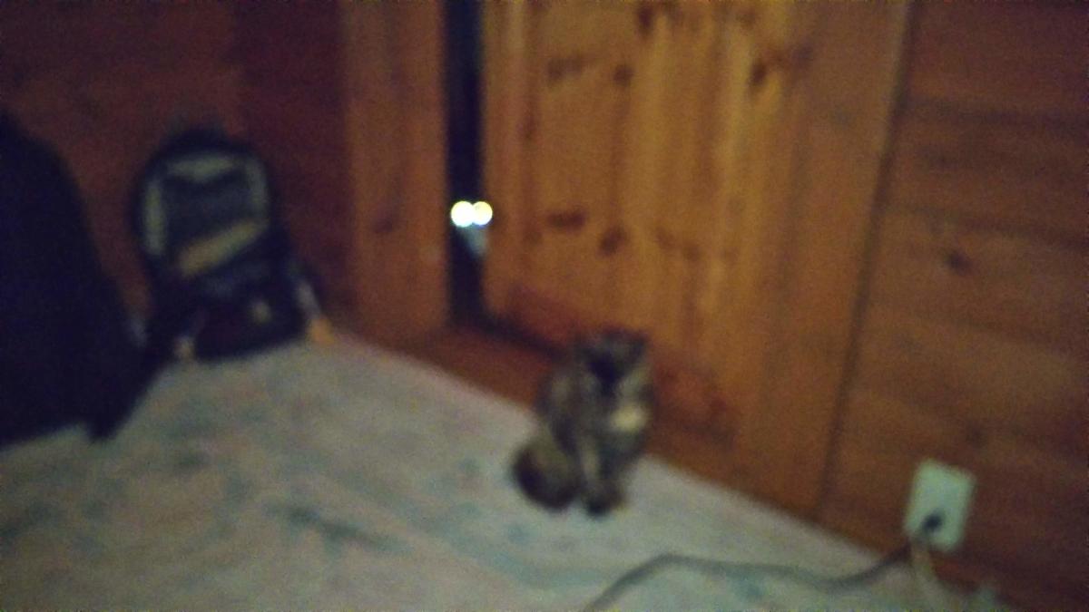 恐怖 猫 見てる