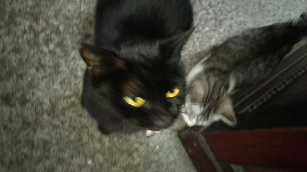 黒猫 肉球占い Dタイプ