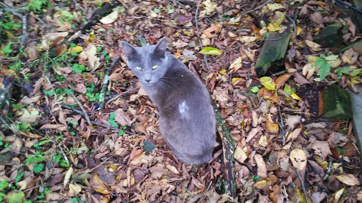 灰柄猫 大人しい ケガ