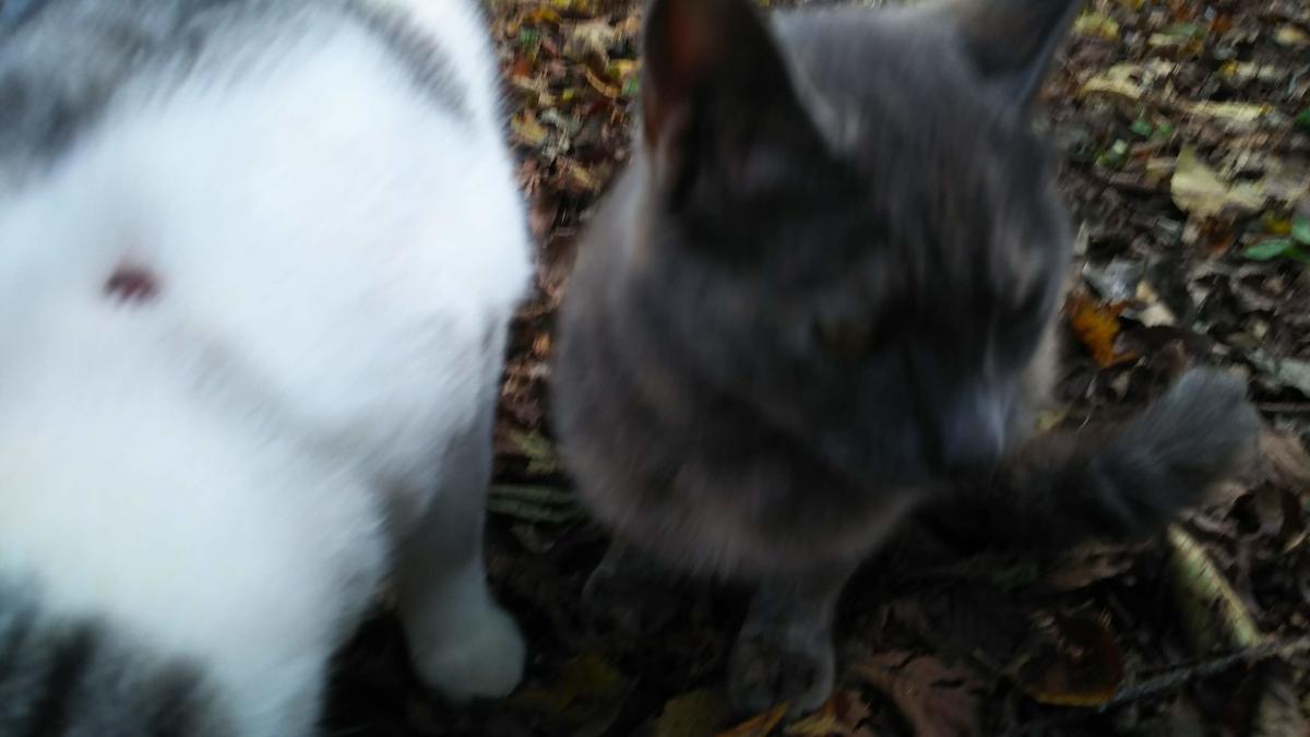 猫 ケガ 争い