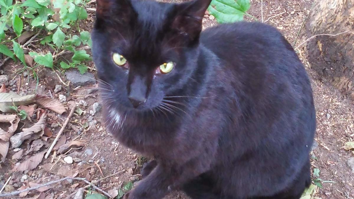 黒猫 おおらか 良猫