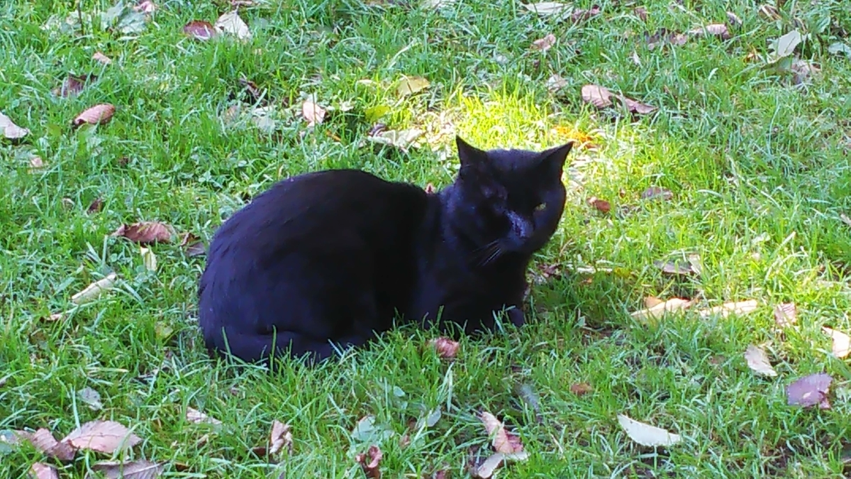 ボス猫 片目 黒猫