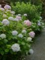 [百花園 2009]