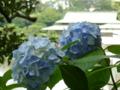 [清澄庭園 2009]