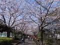 [2012桜]